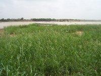 fleuve-senegal-2006.jpg