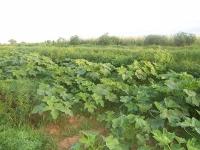 agriculture-de-gombos.jpg